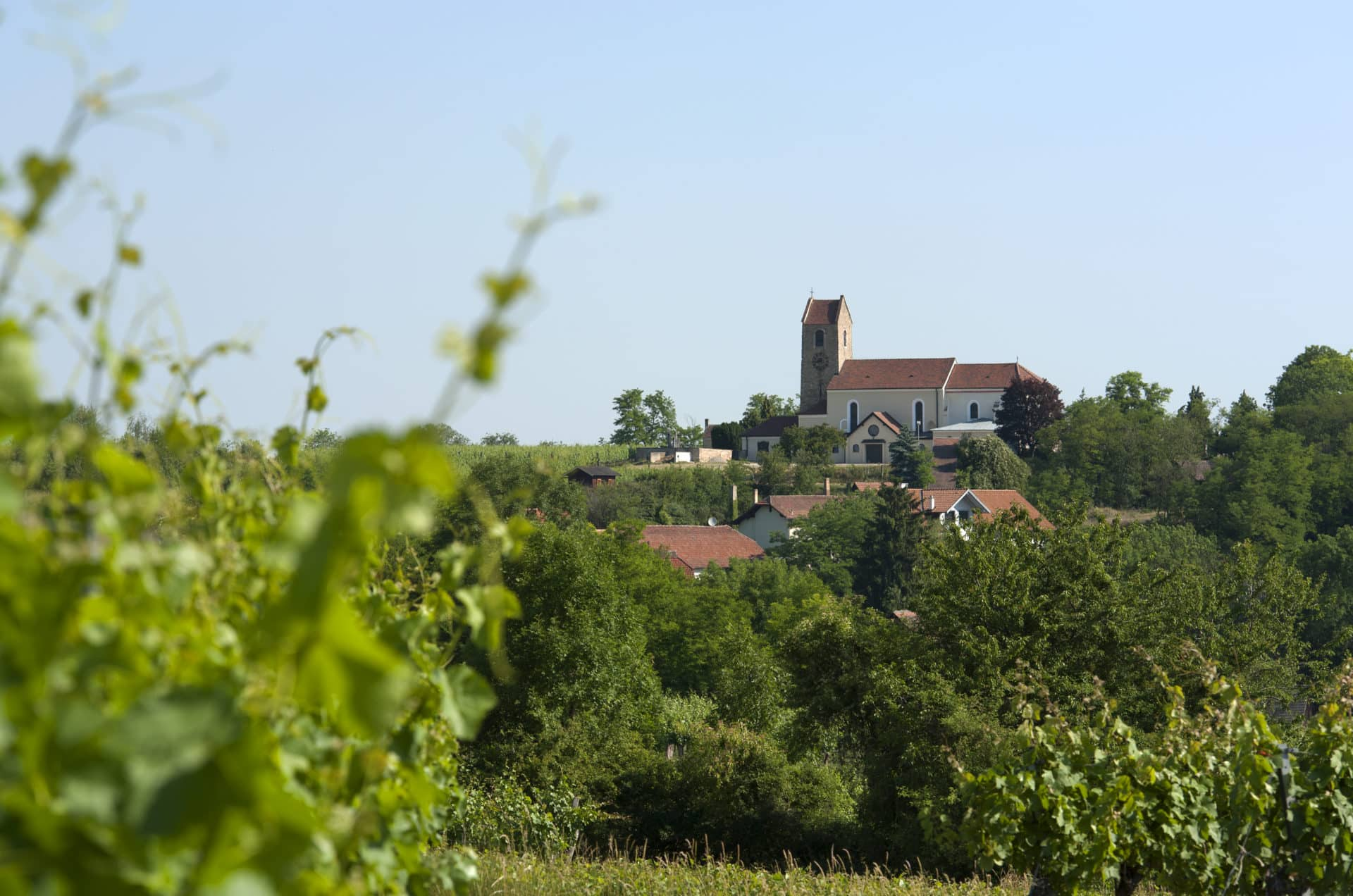 Hohenwarther Kirche mit Weinreben im Vordergrund