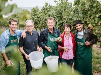 Swingende Weinlese bei uns am Weingut
