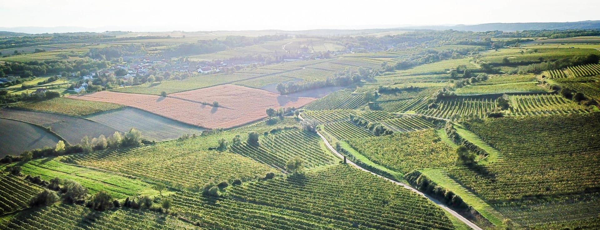 Landschaftsaufnahme Weingärten im Sonnenlicht